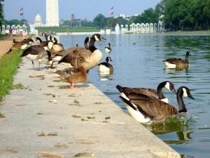 10578353-duck