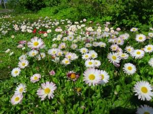 11990849-flowers