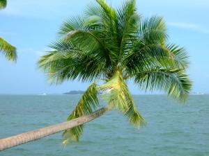 10578227-palm