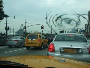 10578432-wild-new-york