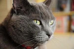 9853574-cat